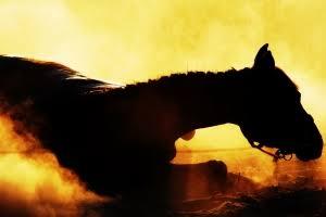 332506-wild-horse-1421909-m